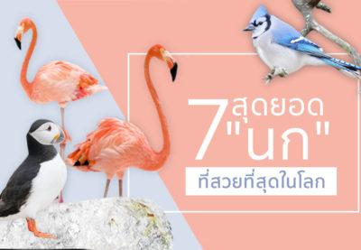 """7 สุดยอด """"นก"""" ตัวท๊อปที่สวยที่สุดในโลก"""