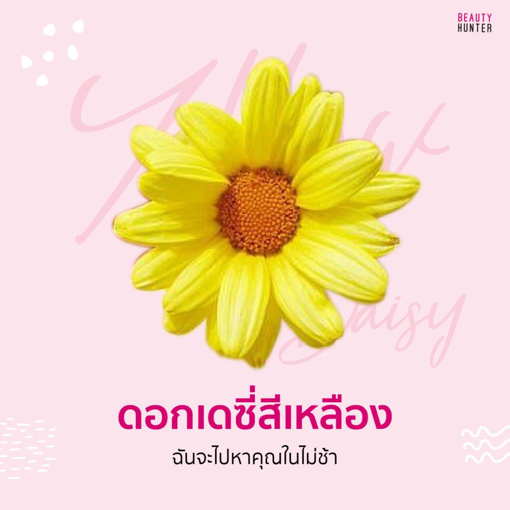 ความหมายดอกไม้ เดซี่สีเหลือง