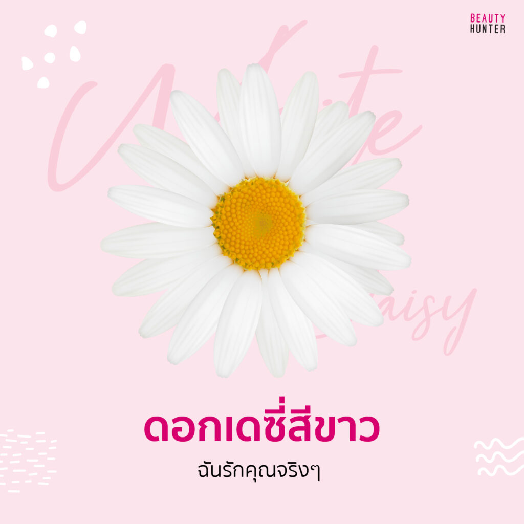 ความหมายดอกไม้ เดซี่สีขาว